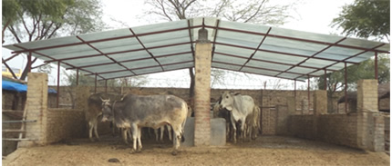 animal life ch care for cows in vrindavan indien bericht ber das projekt. Black Bedroom Furniture Sets. Home Design Ideas